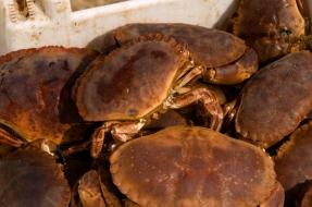 Cromer (Crabs)