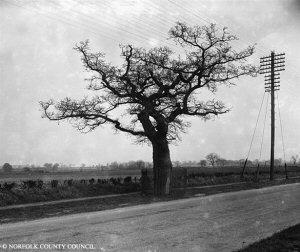 Norwich (ketts-oak)