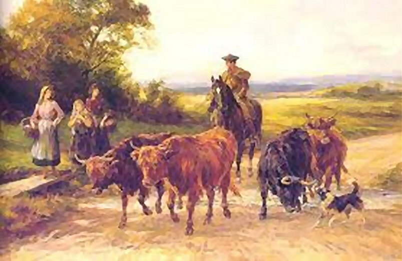 Drover (Collecting Cattle)