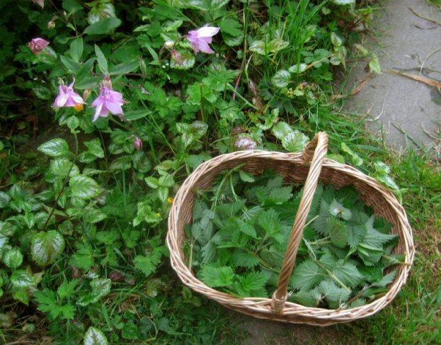 Nettle Folklore 6