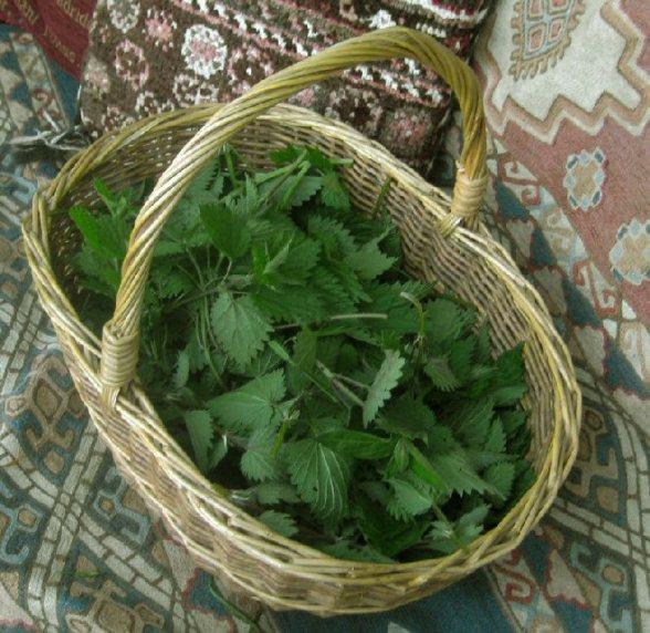 Nettle Folklore 9