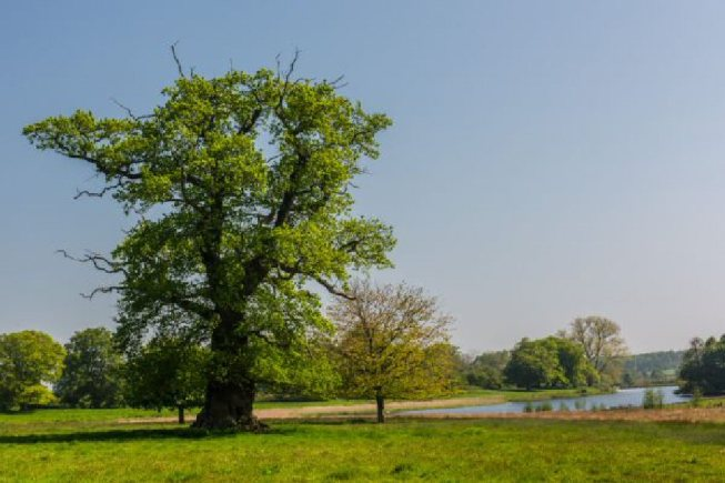 Wolterton Hall (Lake)