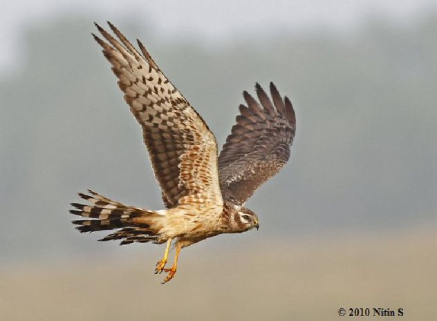 Norfolk Broads (Montagu Harrier)