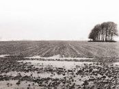 Agincourt (Mud)