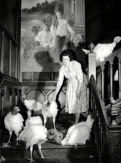 Bernard Matthews (Joyce with turkeys)