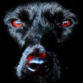 Portrait of a black dog in low key