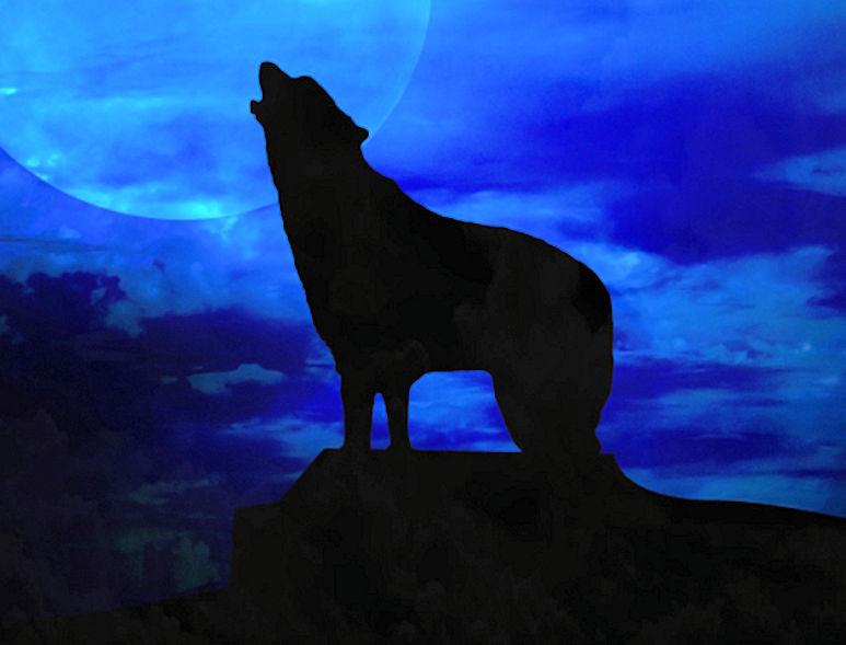 dog and moon