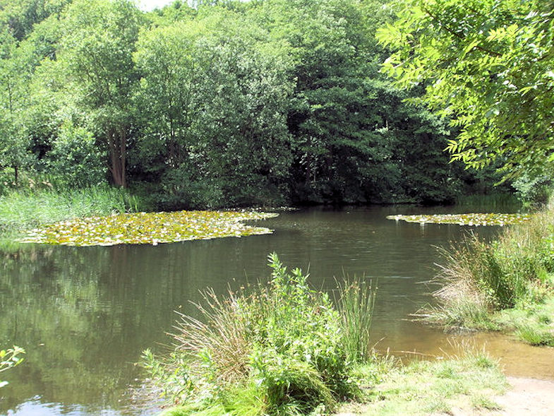 Weybourne Walk (Fishing Pond)
