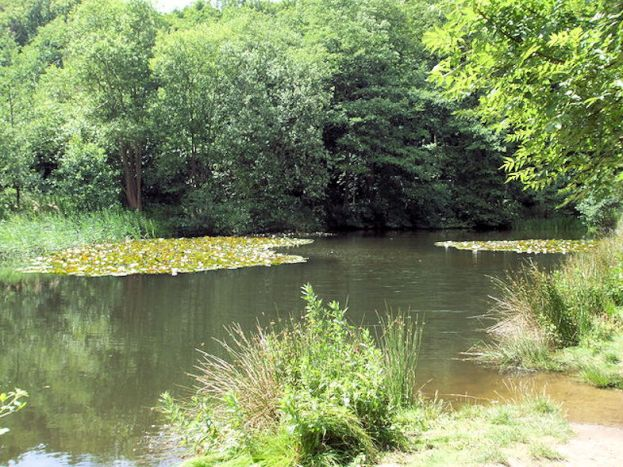 Weybourne Walk (Fishing Pond)