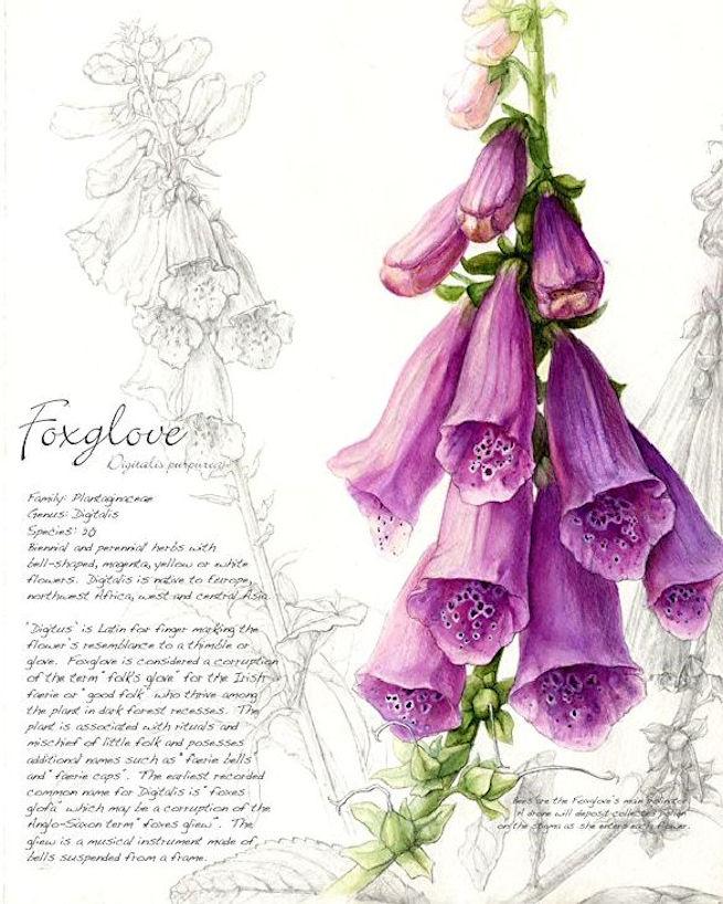 Foxgloves Fey 4