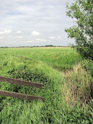 Tunstall (Halvergate Marshes)1
