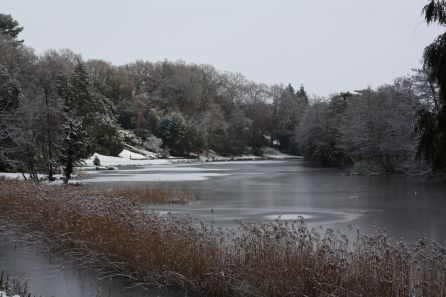 Brundall Gardens (Frozen Lake_Justin Franklin_Pinterest)