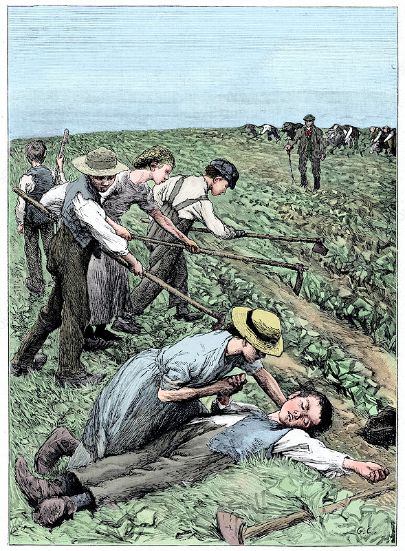 Agricultural Gangs (Child_labour,_c1885_Science Photo Library)