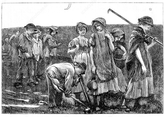 Agricultural Gangs (Child_labour,_c1885_Science Photo Library)2