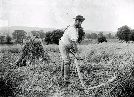 Agricultural Gangs (labourer-with-scythe-1900_Public Domain)